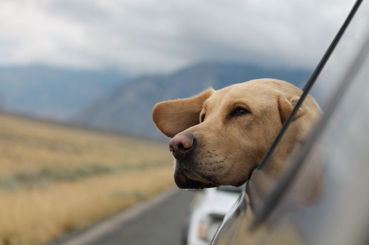 ¿Cómo ser un mejor dueño para tu mascota? 11