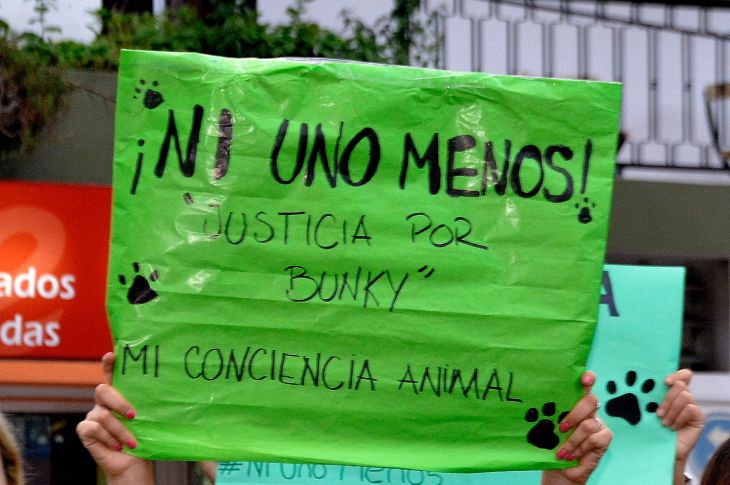 Se logró el dictamen para modificar la Ley de Maltrato Animal 8