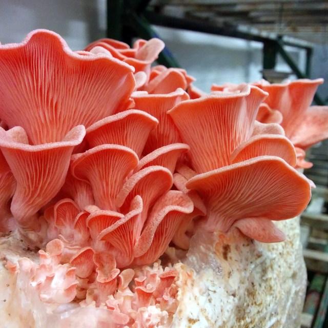 Sabores de Terra Fungi 8
