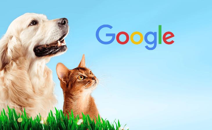 En la alimentación de las mascotas las búsquedas priorizan calidad y precio 6