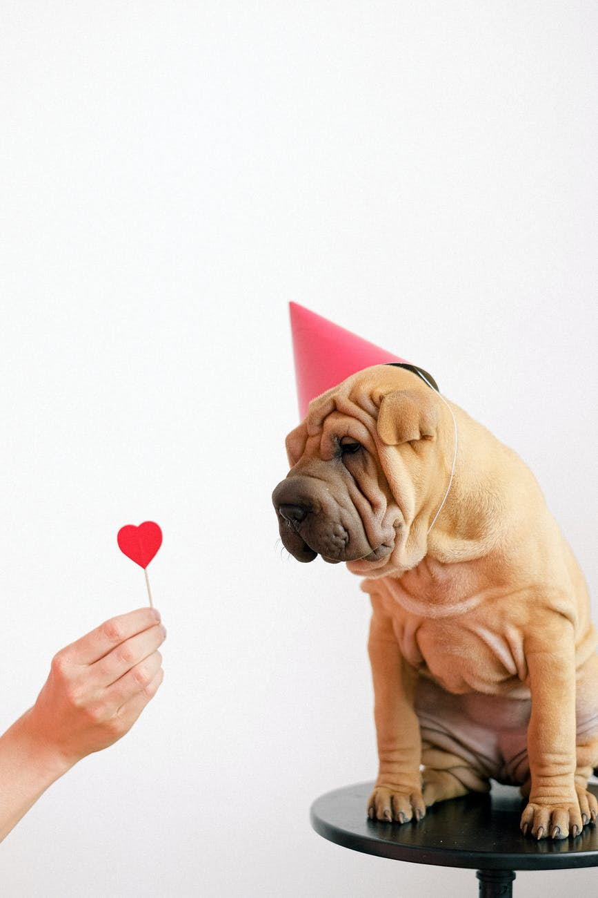 cute puppy wearing a party hat
