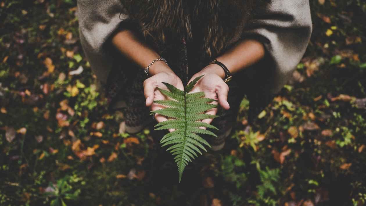woman holding fern leaf
