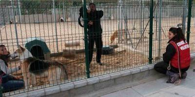 Centro de acogida de animales.