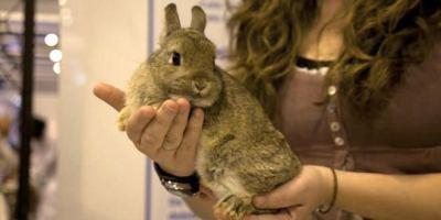Un conejo en 100x100 mascota.