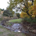 Acebeda de Prádena: ruta por uno de los mejores bosques de acebos
