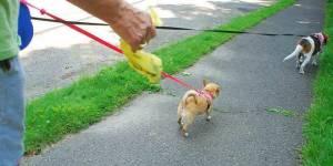 Bolsas para cacas de perros