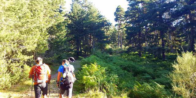 ruta de senderismo al tejo Barondillo lozoya