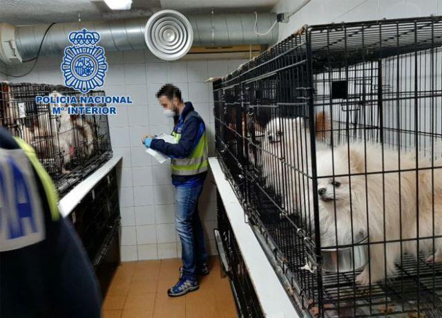 La Policía ha intervenido canes de la raza chihuahua y Pomeriana