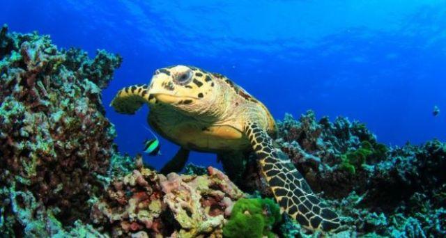 Apertura Zoo Aquarium y parques atracciones