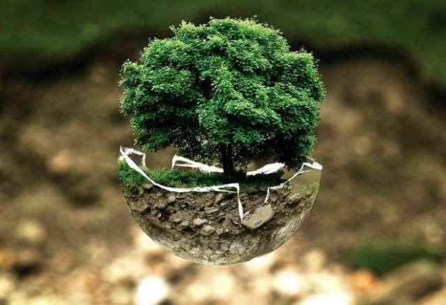huella carbono árbol
