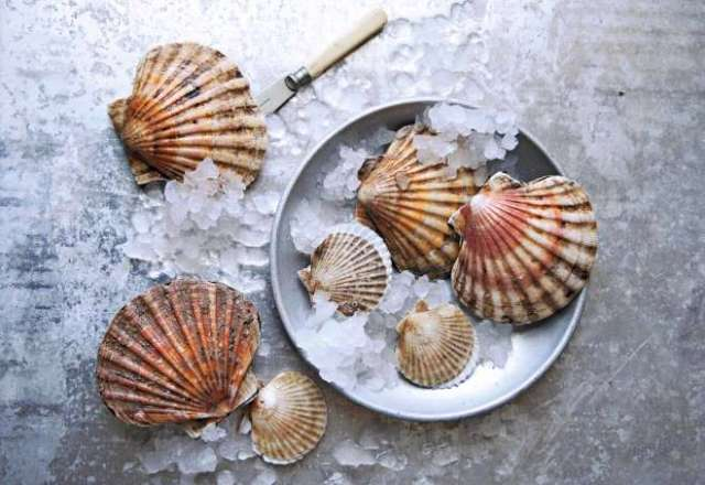 vieiras cocinar marisco