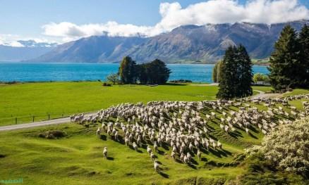 نيوزيلندا - بلد الرماد والجمال