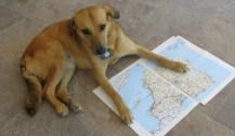 Planeando la ruta a seguir en nuestra peregrinación a Santiago de Compostela, en el norte de España