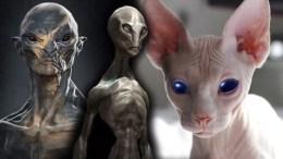 origen extraterrestre de los gatos