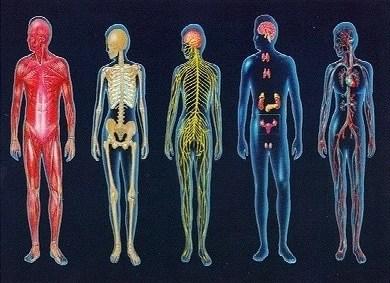 cuerpo fisico