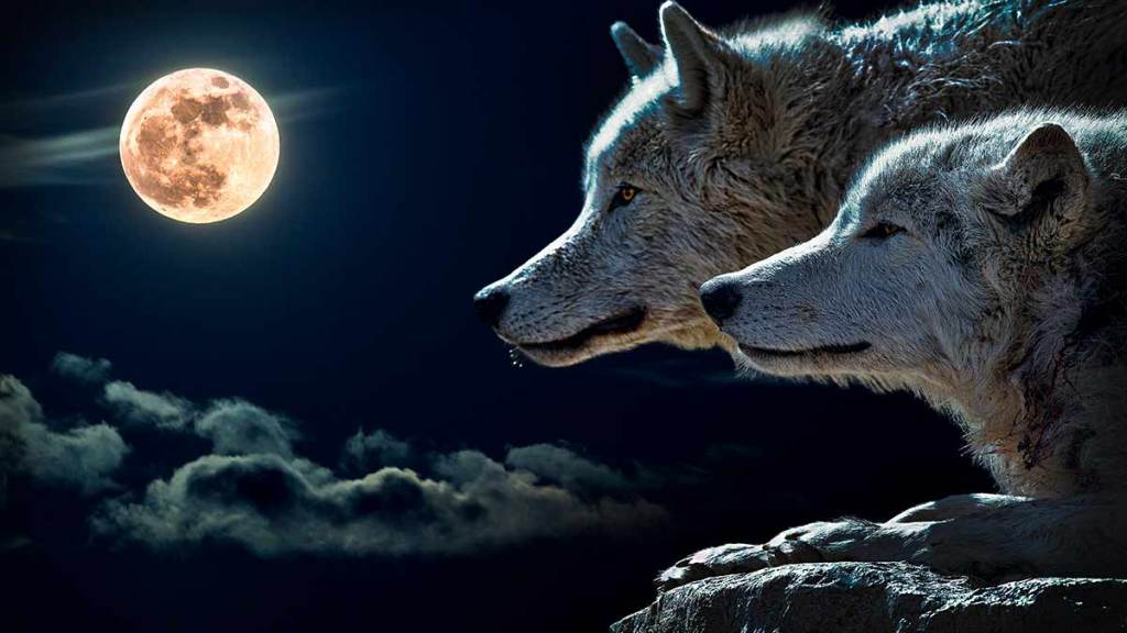 Luna Lobo 2021