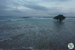 Foto de Manglar en medio del mar