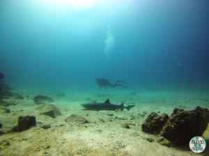 Foto de Peter submarinismo con tiburón elmundoenlamochila.com