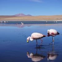Salar de Uyuni. Guía de viaje, tour, precios y consejos