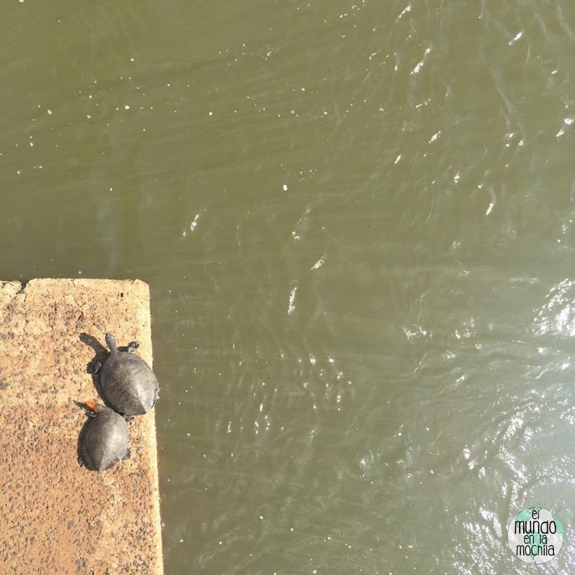tortugas_mariposa_iguazu