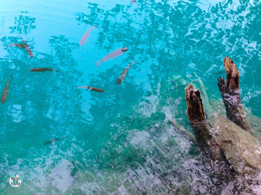 Agua en tono celeste del Parque Nacional de los Lagos de Plitvice