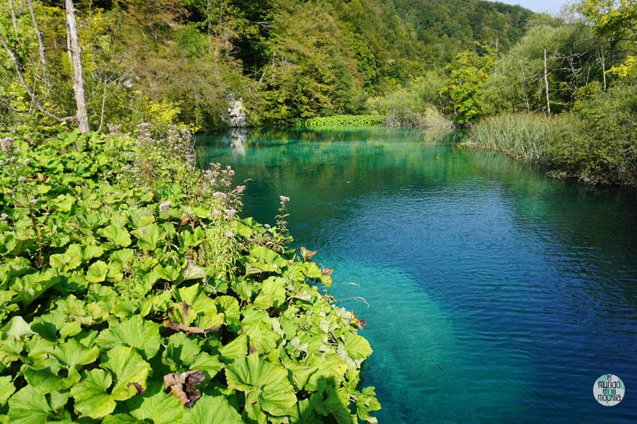 Vegetación sobre los increíbles colores del agua del Parque Nacional de los Lagos de Plitvice