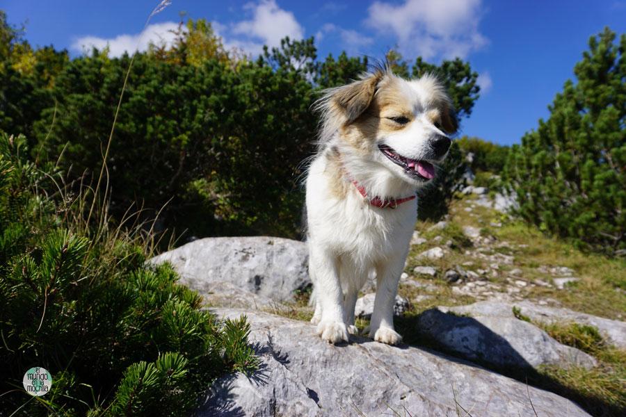 Perro callejero en las montañas de Montenegro