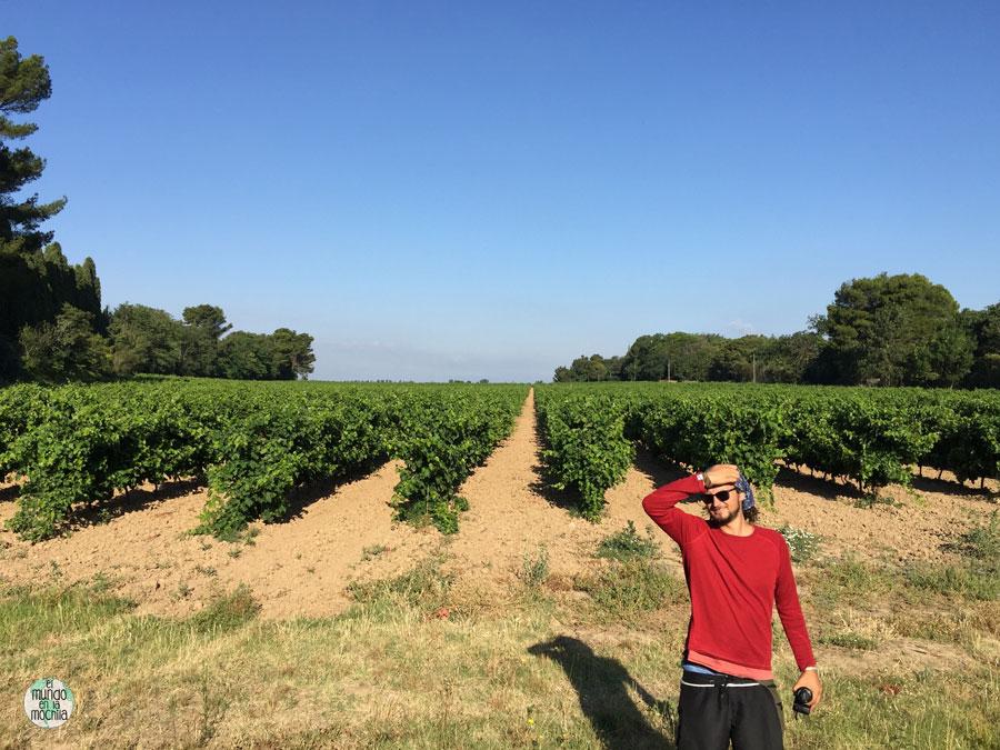 Peter buscando lugar en los alrededores de unos viñedos