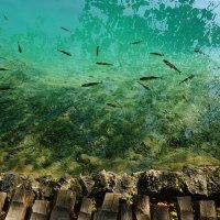 Lagos de Plitvice, experiencia en azul y verde