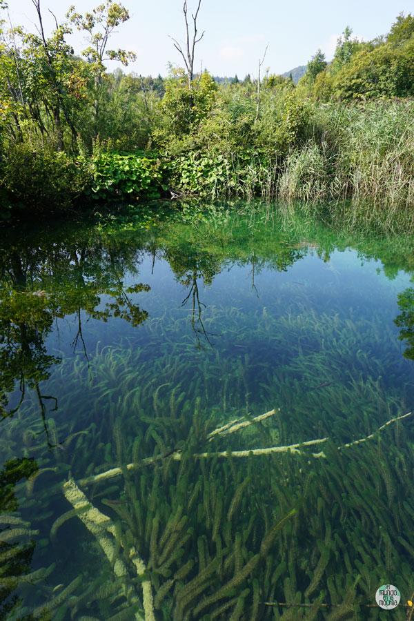 La vida subacuática en el Parque Nacional Plitvice