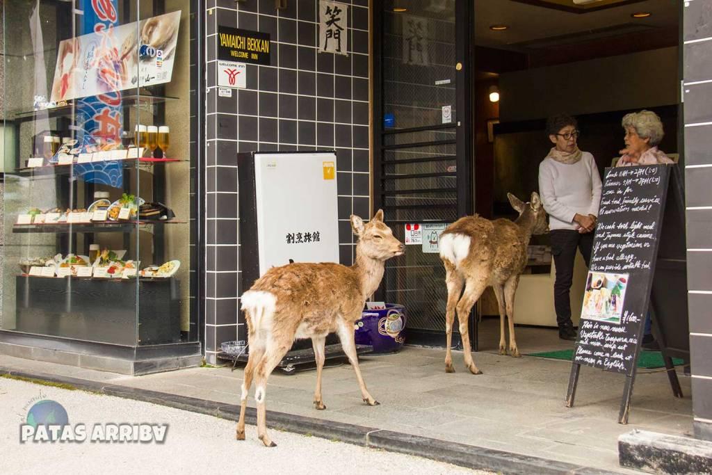 Los ciervos de Miyajima