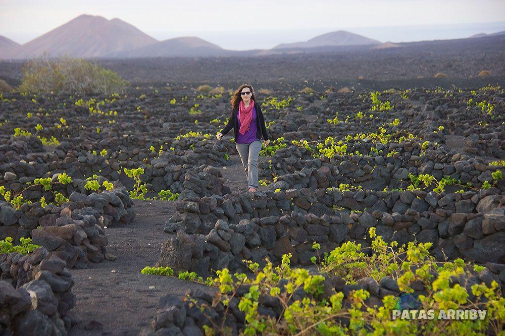 La Geria Viñedo Lanzarote