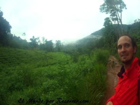 Entrando entre plantaciones de té al parque nacional de Sinhajara