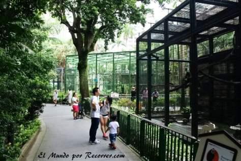 Monos en el botanical garden