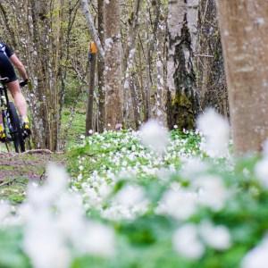 Härliga saker om våren - foto Eskil Laago