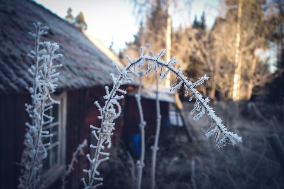kvarnskogen_alboga_december_2106-15