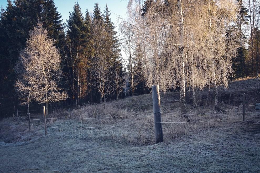 kvarnskogen_alboga_december_2106-7