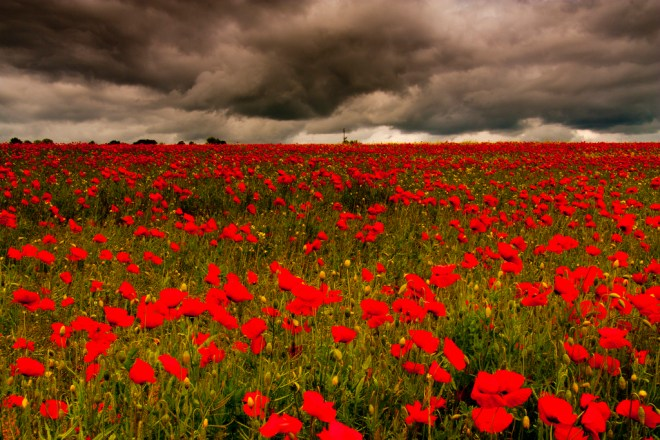 Poppy field in Somme, France. The Battle of the Somme, in which the British and French armies launched a combined offensive against the German army between 1 July and 18 November 1916, was the key turning point of the Great War. One million people died in the battle, with around 60,000 British soldiers being killed on the first day alone.