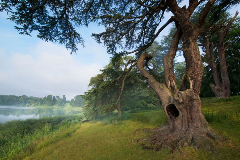 blenheim-harry-potter-tree