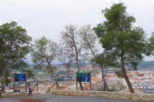 Cuatro pinos afectados en el canapé del castillo