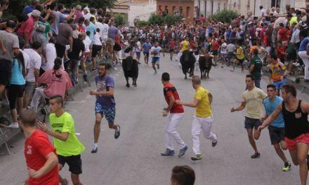 Intensa carrera de los novillos de La Plata en Calasparra el día 4