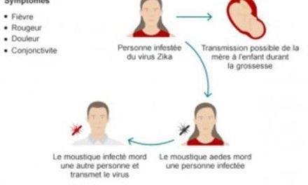 El virus Zika y un viejo conocido: Aedes aegypti