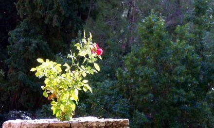 El próximo otoño se rehabilitará la terraza del Santuario que resultó dañada por la inundación de Abril de 2013