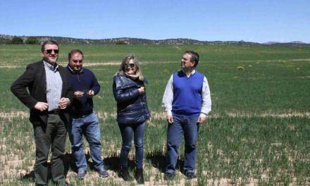 Agricultores de Caravaca reciben el pago verde o 'greenning' por aplicar mejoras ambientales