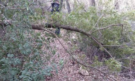 Trabajos de poda y recogida de ramas en Bullas como consecuencia del temporal de nieve