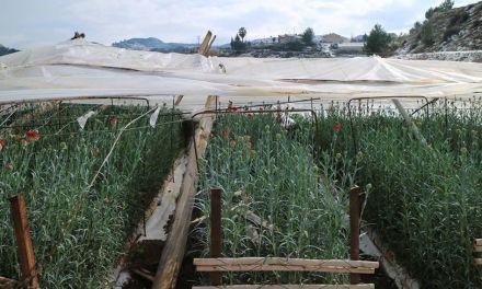 Ciudadanos exige por tercera vez que se convoquen las ayudas a los agricultores de Cehegín afectados por los daños ocasionados por las nevadas