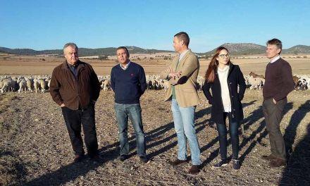 El PP muestra su apoyo al cordero Segureño y reivindica ayudas al sector ganadero para fijar población en el medio rural