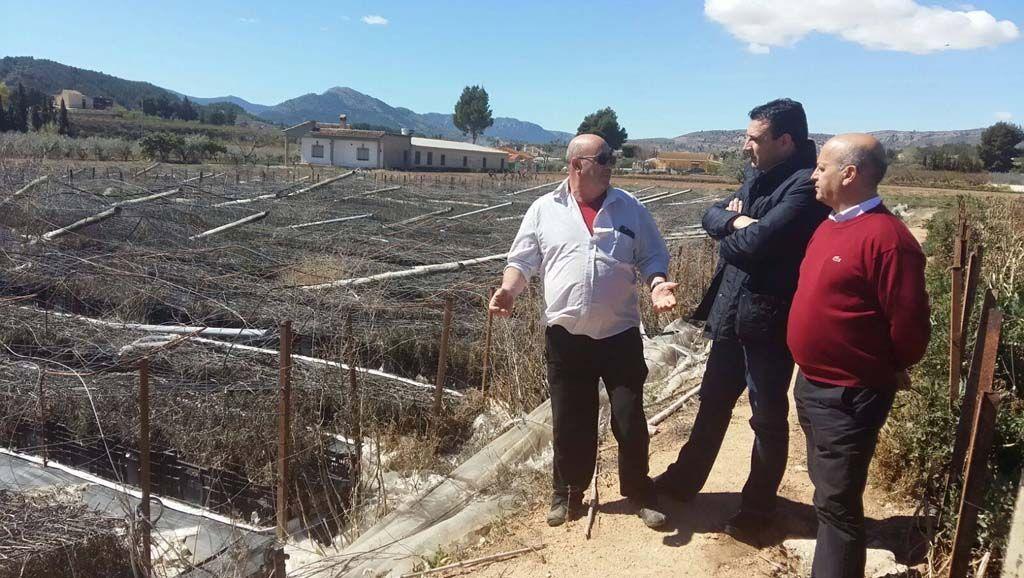 Ciudadanos denuncia que los agricultores de flor cortada de Cehegín aún no han recibido las ayudas del Gobierno regional