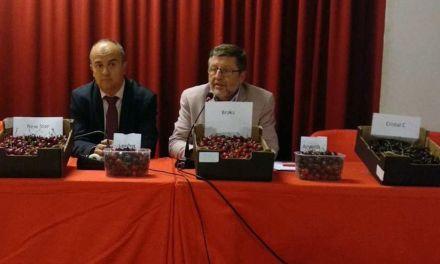 Una jornada técnica en Caravaca estudia los resultados de las 34 variedades de cerezo en la Región de Murci