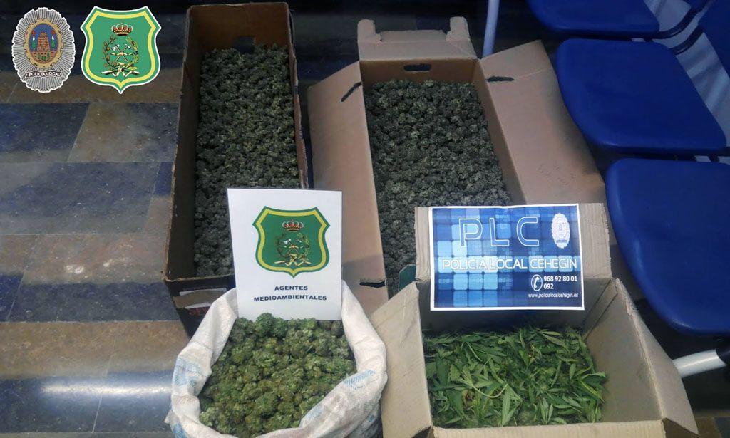 La Policía Local de Cehegín y Agentes Medioambientales desmantelan una plantación de marihuana en la localidad